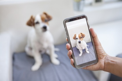 Advertising The Sale Of Animals Online Has A AED500,000 Fine