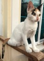 lovely kitten SPICY looking for new home