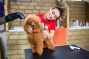 Pet Grooming and Pampering Services in Dubai Starting From AED 49